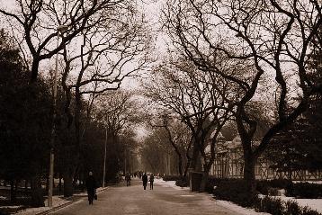 Центральная парковая аллея